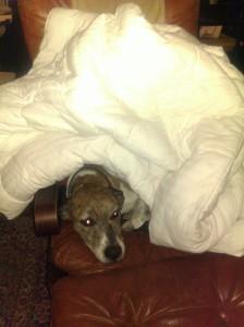 It's a Woo under a comforter